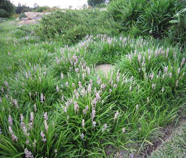 The best drought tolerant low growing plants for Low growing plants for landscaping