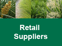 Where to Buy Strappy Leaf Plants - Retail Suppliers