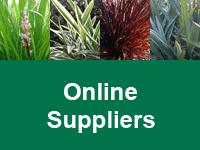 foliage-first-online