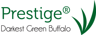prestige buffalo turf