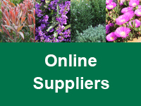shrub-ground-covers-online