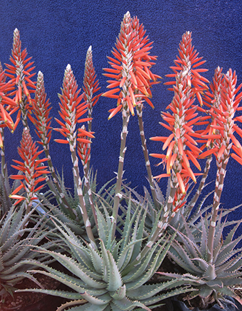 sea-urchin-plants