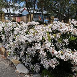 Landscape Garden Plants - Choosing the Right Plant