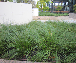 Landscape Gardening Plants - How to Mass Plant for Large Gardens