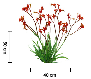 Amber Velvet Kangaroo Paw Growing Guide