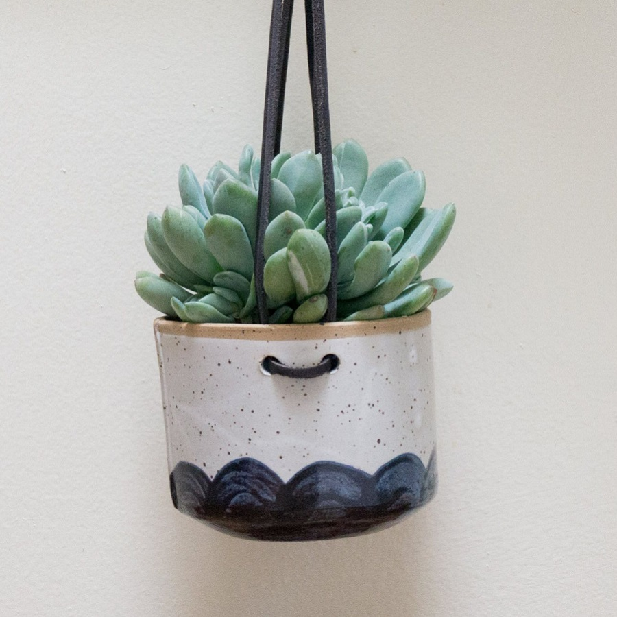 Agave Succulent in Hanging Pot
