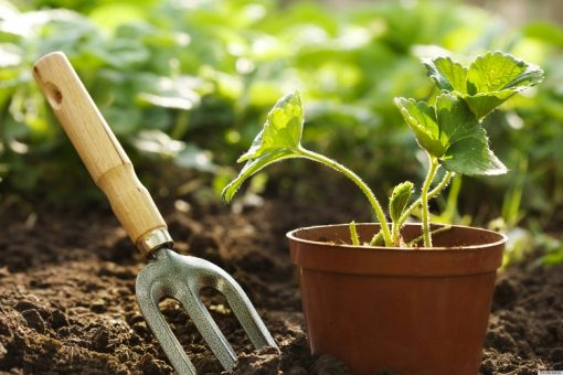Good organic slow release fertilizers including compost, plant and seaweed based fertilizers