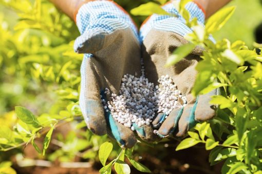 Organic fertilizers not only feed the plants but they also usually improve general soil condition and health