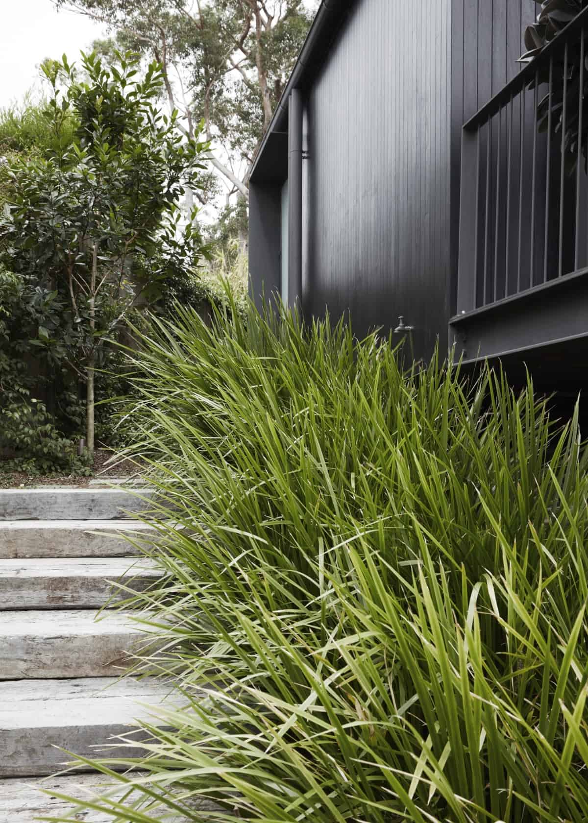 Lomandra Is A Genus Of Native Australian Strappy Or Grass-like Plants