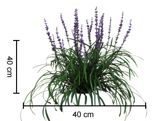 Amethyst Liriope plant growth height guide