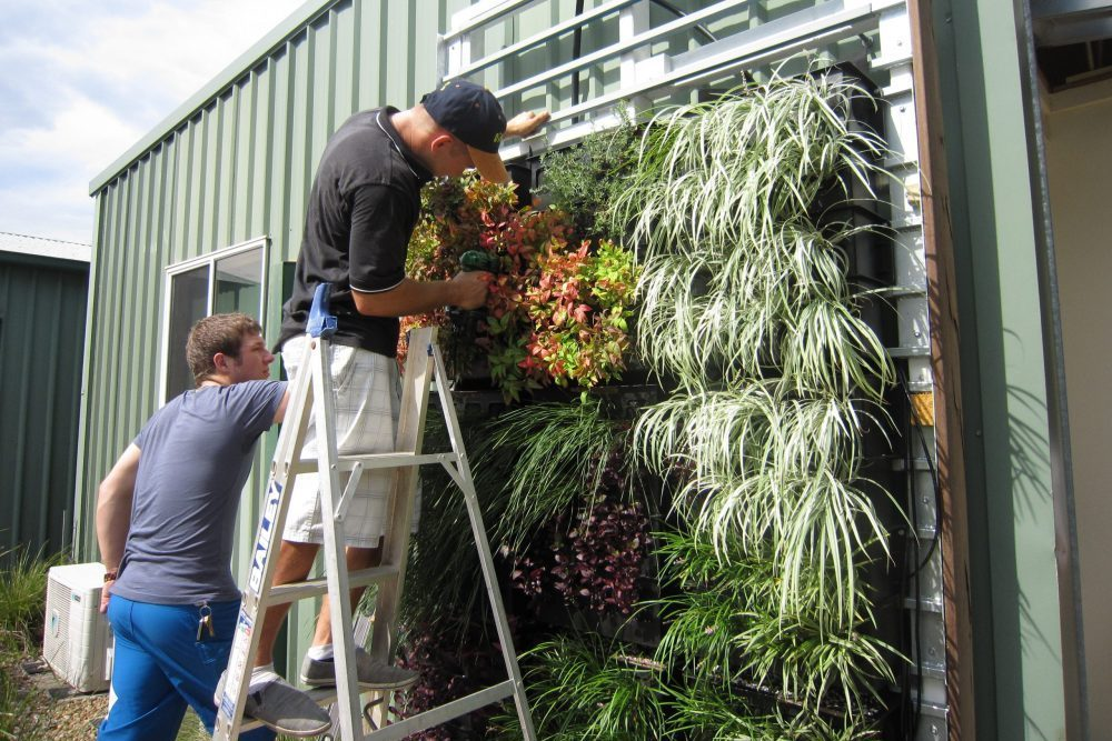 Green Wall Trial Testing A Variety Of Ozbreed Plants