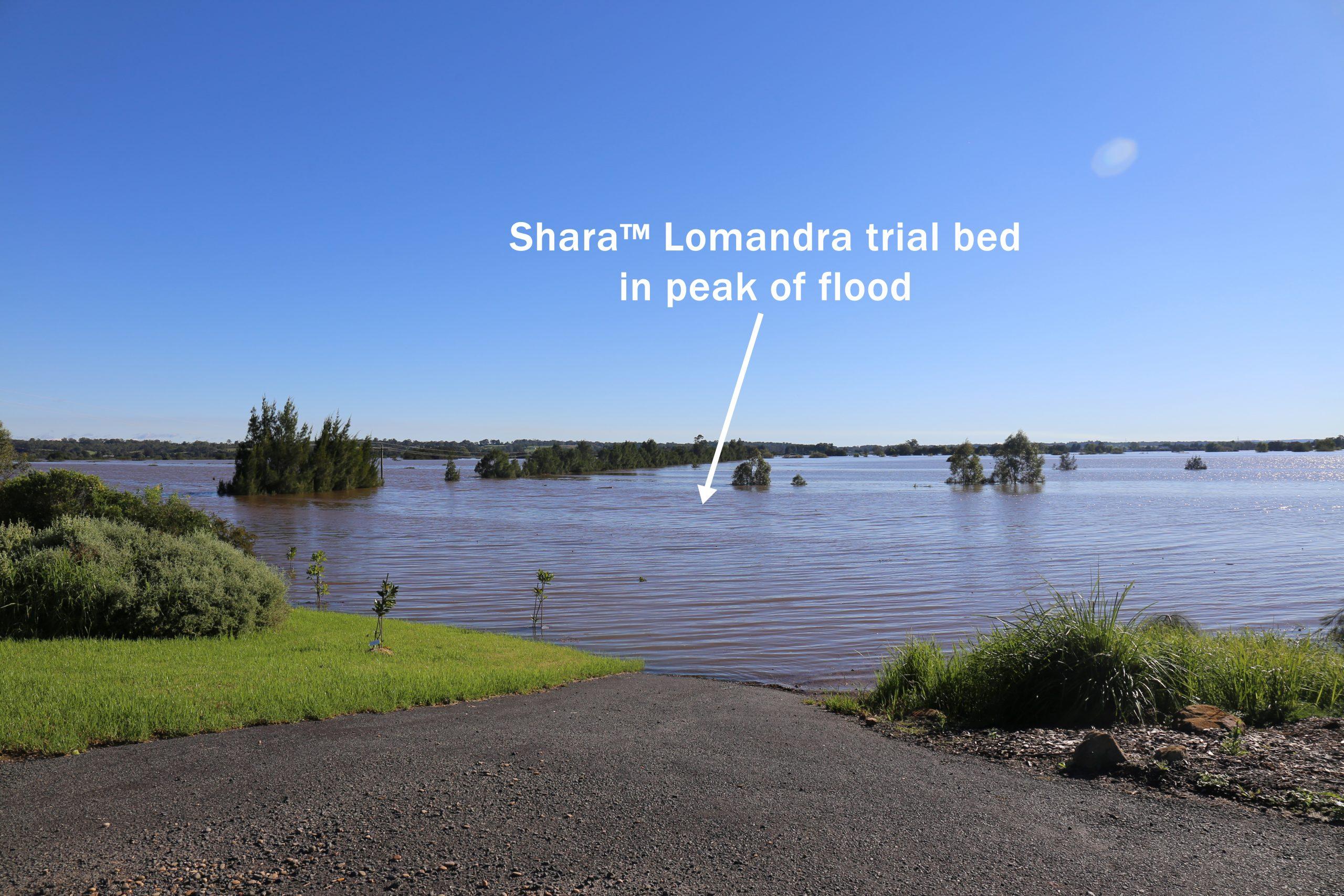 Shara lomandra in 2021 richmond flood