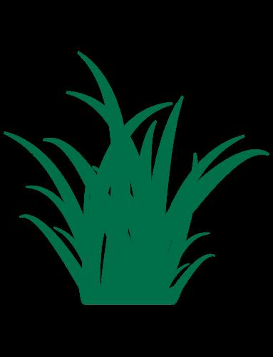 Strappy Leaf Plants