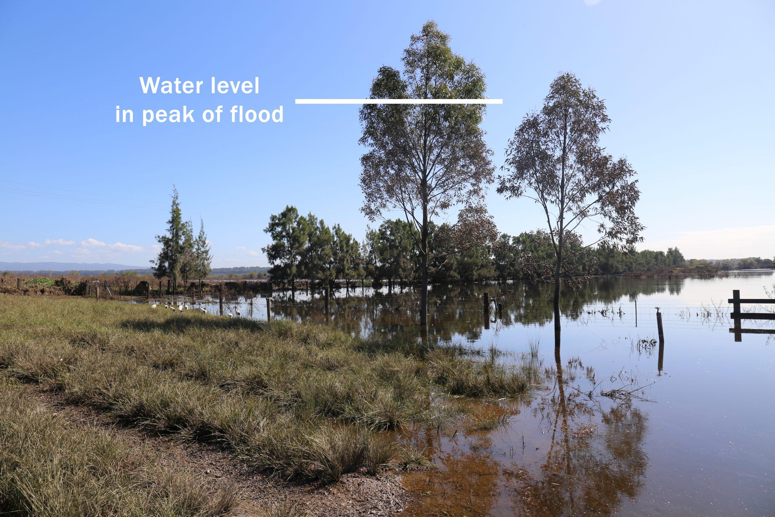 Shara Lomandra 2021 Flood Richmond Indicating Peak Water Level
