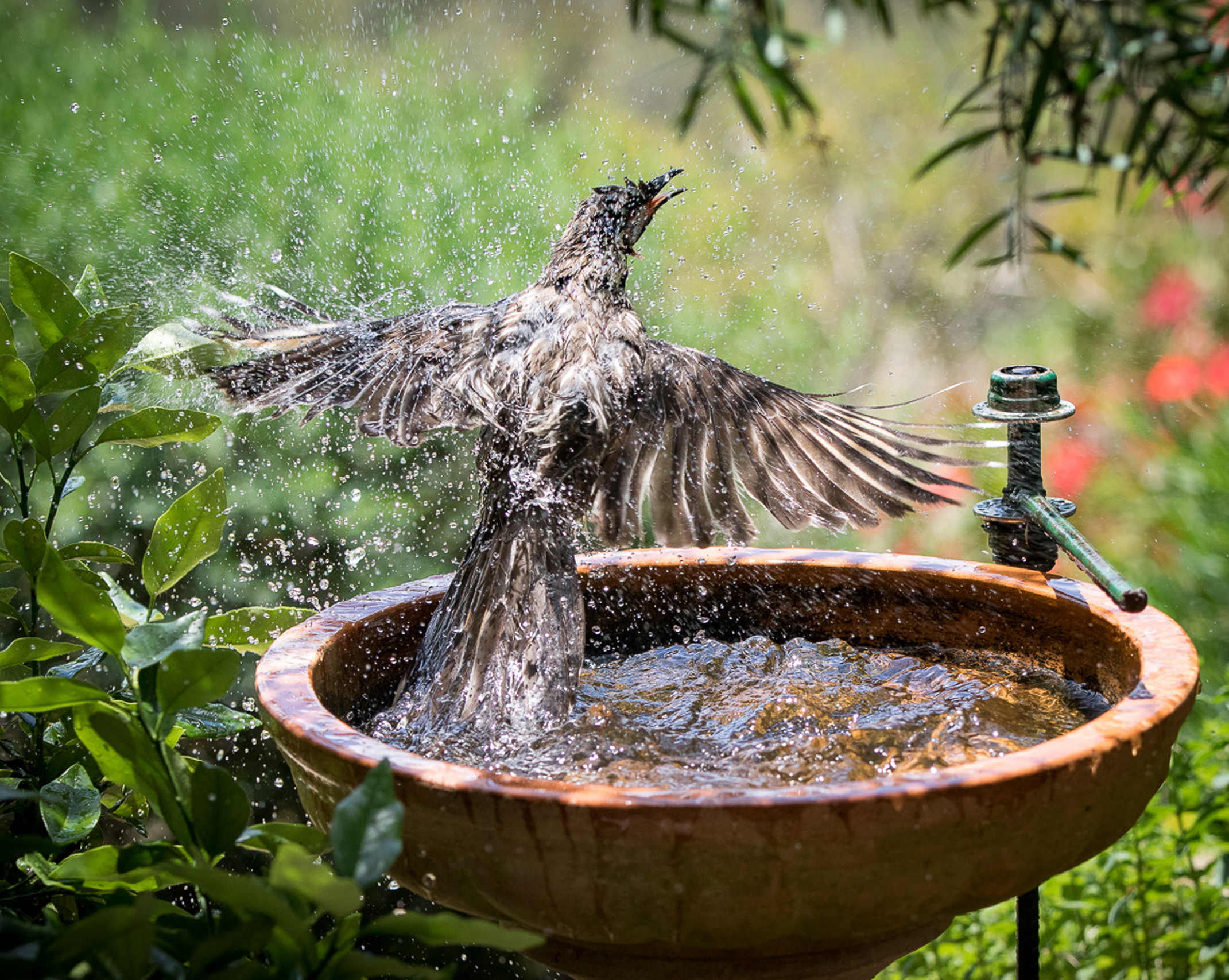 Small backyards can still attract visitors with small water features such as bird baths