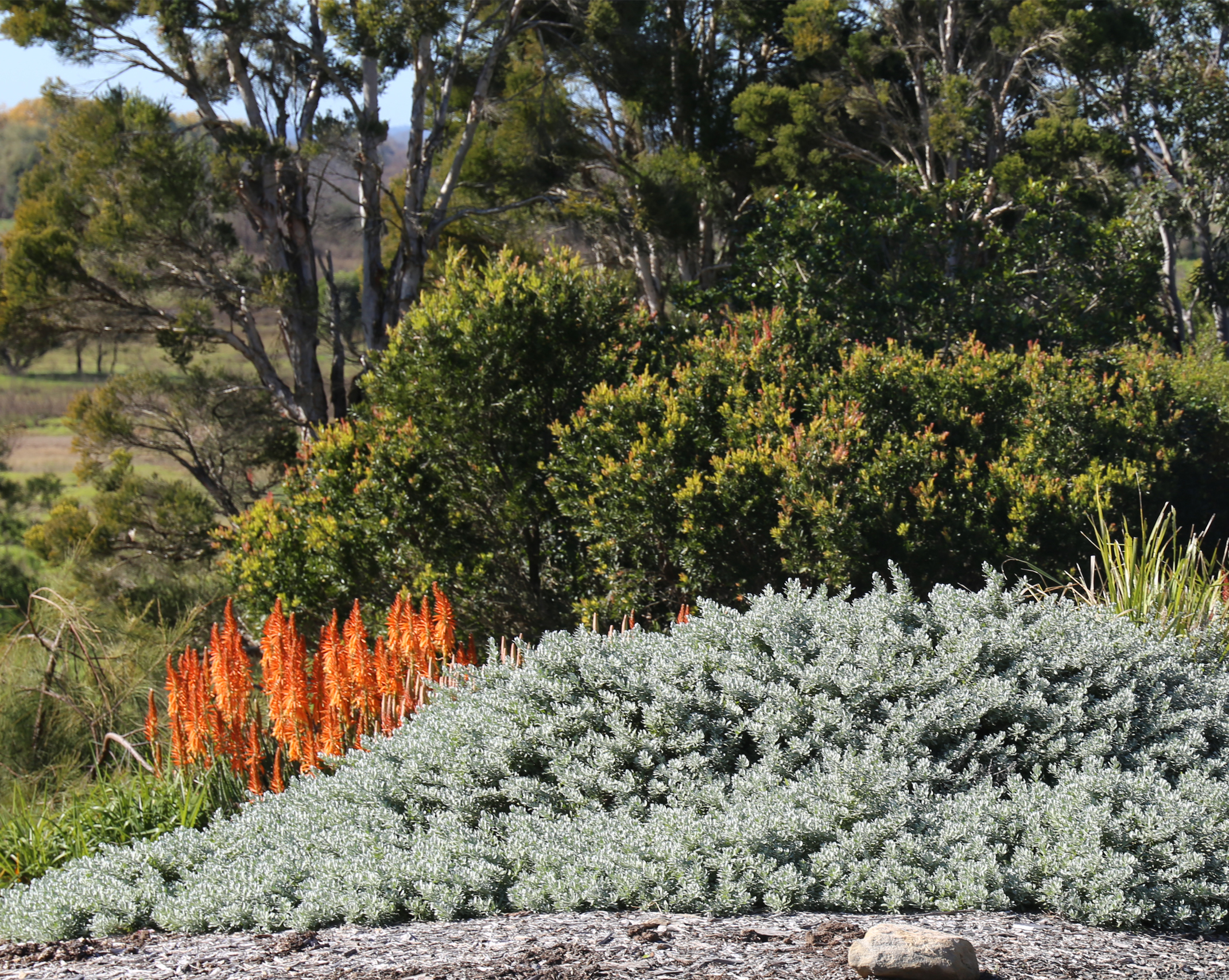 Blue Horizon™ Eremophila provides cover for birds, lizards and other small animals