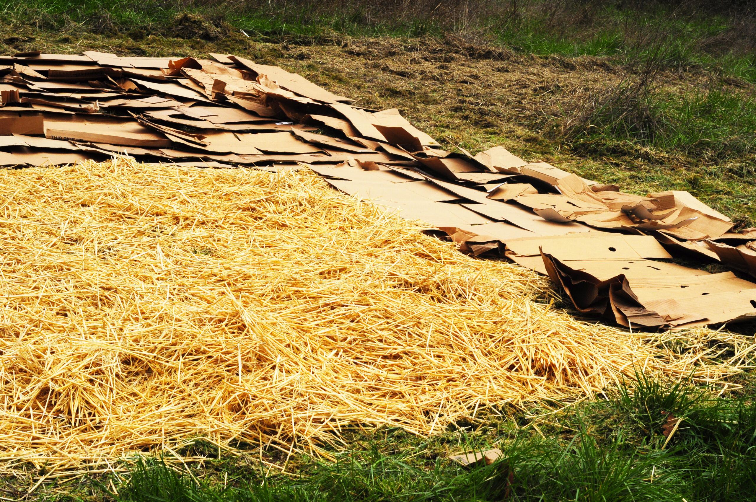 Cardboard sheet mulch
