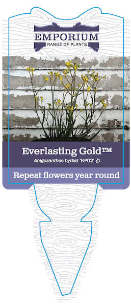 Everlasting Gold Label